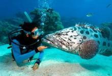 Дайвинг на острове Бора-Бора: Тупитупити