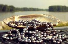 Черная жемчужина Таити